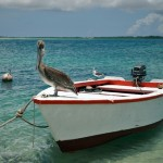 Bonaire, live and work in the Dutch Caribbean